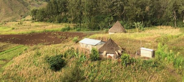 timorese farm